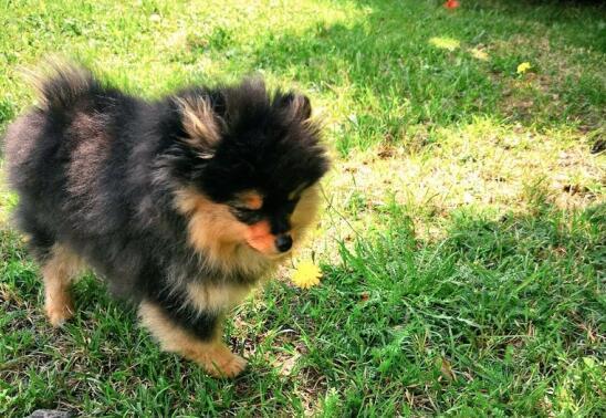 喜欢狗狗,养几只宠物狗最合适?6