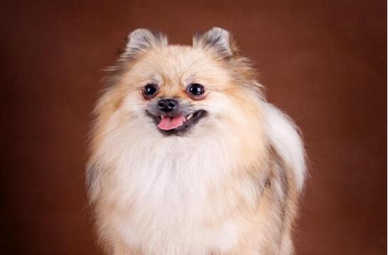 喜欢狗狗,养几只宠物狗最合适?5