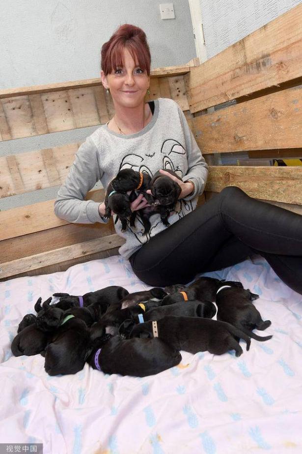 英国狗狗一胎产下21只狗宝宝 太神奇了7