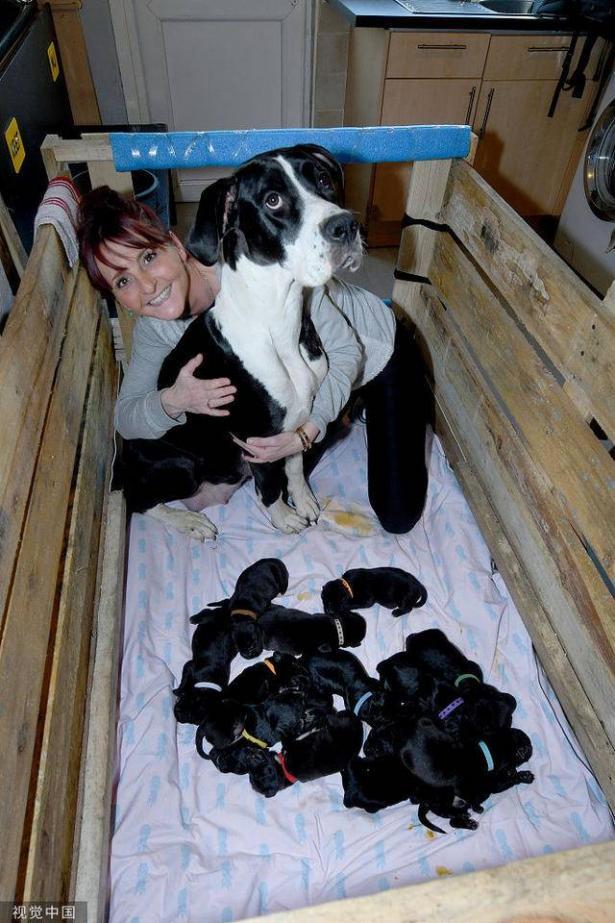 英国狗狗一胎产下21只狗宝宝 太神奇了6