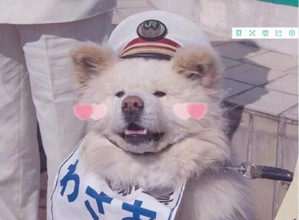 日本超人气的丑萌秋田站长走了,网友:和奶奶团聚了!5