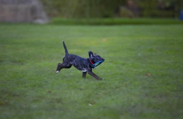 不可思议:狗狗可以帮医生嗅出癌症7
