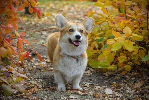 不可思议:狗狗可以帮医生嗅出癌症6