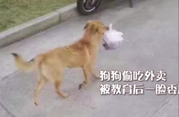 """校园狗狗偷外卖意外成""""网红"""",大家众筹买狗粮,暖心6"""