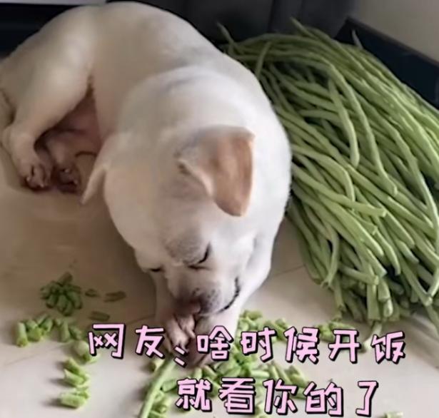 狗子用嘴帮主人择豆角,网友:啥时候开饭就看你的了6