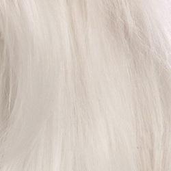 马尔济斯犬毛发图片