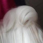 马尔济斯犬尾巴图片