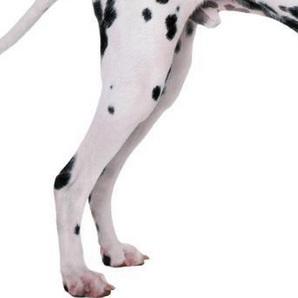 斑点狗后驱图片