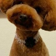 贵宾犬颈部图片