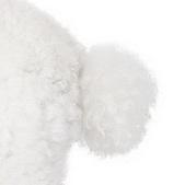 贵宾犬尾巴图片
