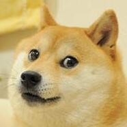 柴犬头部图片