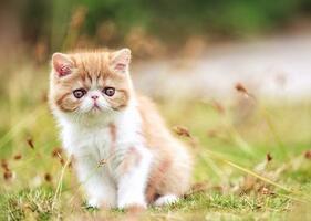 加菲猫多杀钱一只