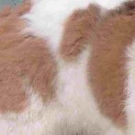 中亚牧羊犬毛发图片