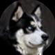 阿拉斯加雪橇犬遮罩