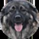 高加索犬遮罩