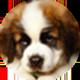 圣伯纳犬遮罩