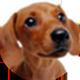 腊肠犬遮罩