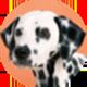 斑点狗遮罩<
