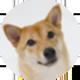 秋田犬遮罩