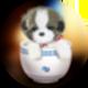 茶杯犬遮罩