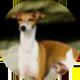 格力犬遮罩