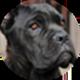 卡斯罗犬遮罩