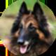 比利时牧羊犬遮罩