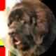 纽芬兰犬遮罩