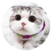 折耳(er)貓