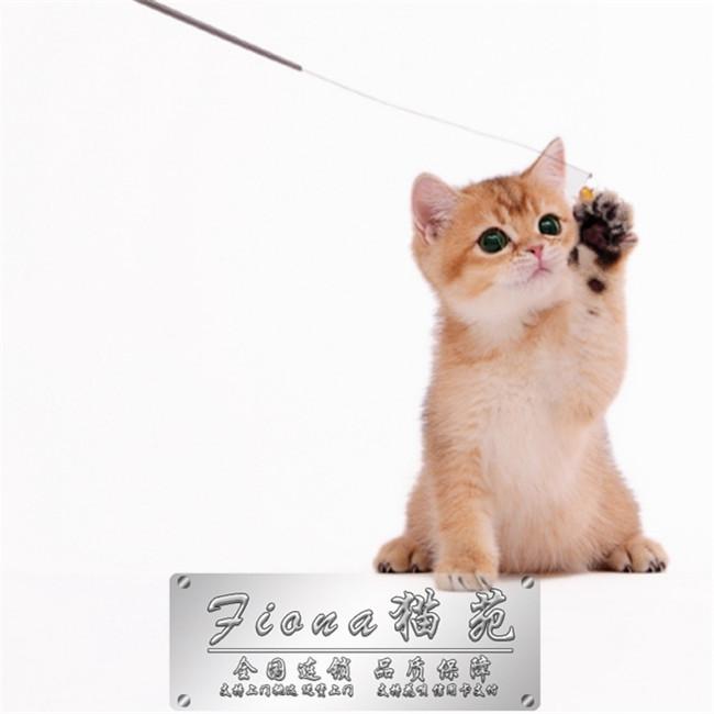 猫舍出售纯种健康小猫咪品种齐全多只可选