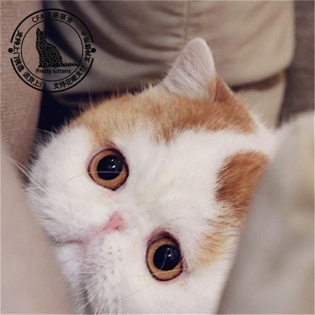 猫田脸图_什么p图软件有口罩的_脸上有猫脸的美图软件
