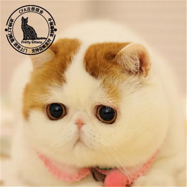 主要品种:蓝猫,蓝白,银渐层,加菲猫,美短,布偶,金吉