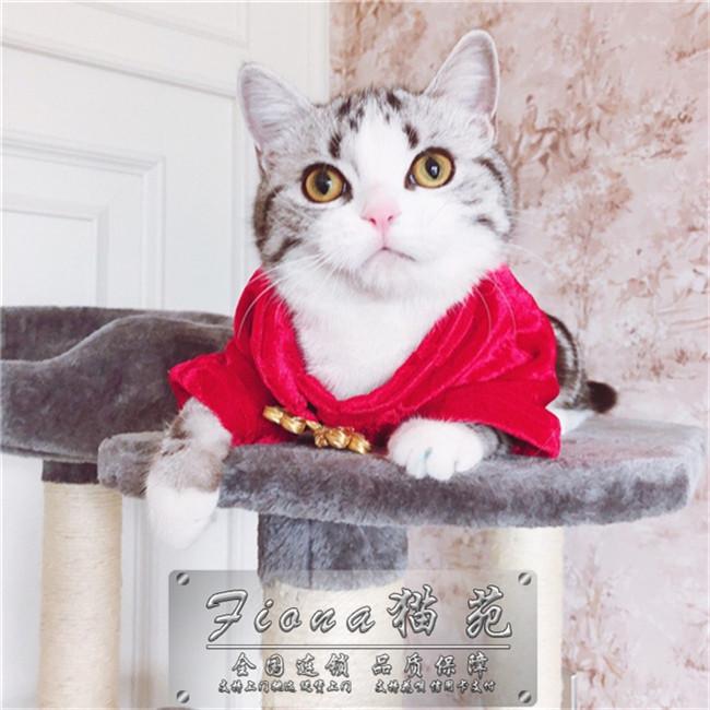 出售自家纯种美国短毛宠物猫鱼骨纹蝴蝶纹美短虎斑猫美短幼猫活