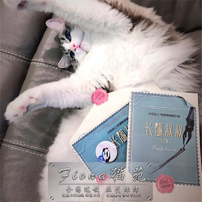 布偶猫仙女猫优雅高贵幼猫活体支持上门送货上门