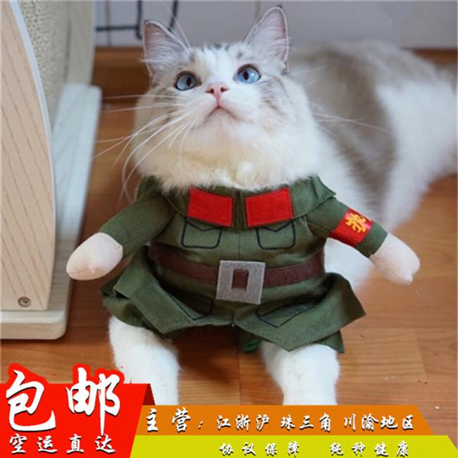猫舍出售家养布偶猫宠物猫幼猫活体仙女气质高贵优雅CFA认证