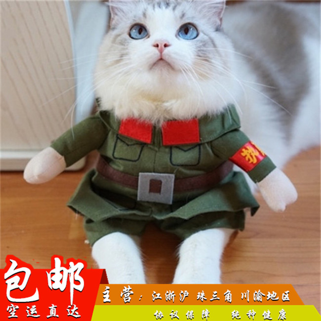 纯种家养健康双色蓝眼布偶猫满耳满背无色块猫舍出售布偶猫幼猫