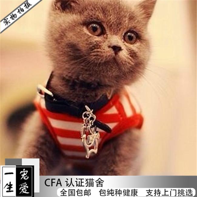 宠物猫咪活体纯种英短蓝猫俄罗斯蓝猫幼猫家养小猫咪活猫幼崽立