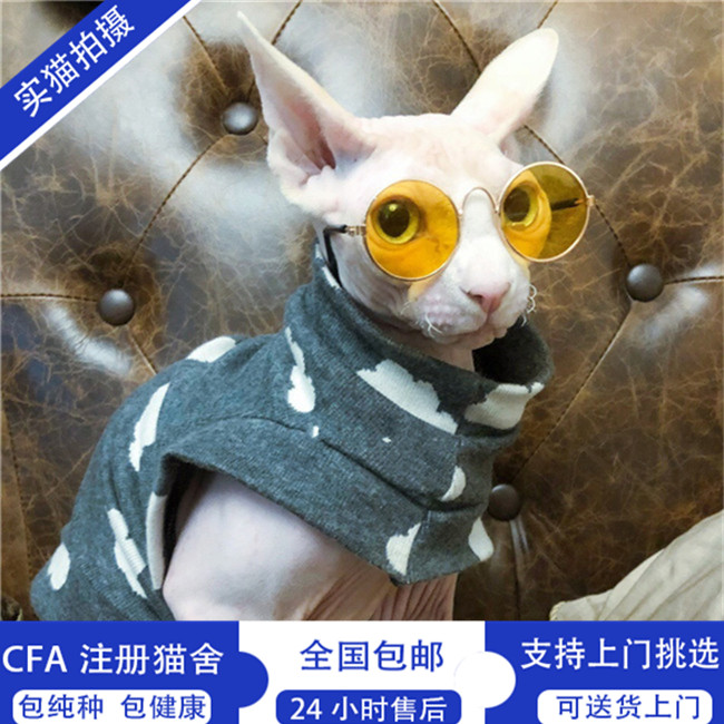 纯种加菲猫活体宠物猫幼猫加菲猫异国短毛猫布偶猫无毛猫美短渐