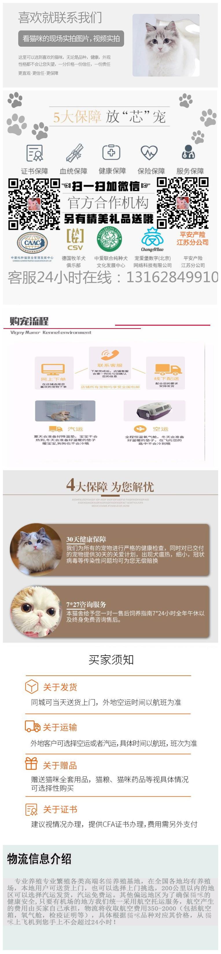 活体宠物猫,正规猫舍自己繁育,现货出售看上买5