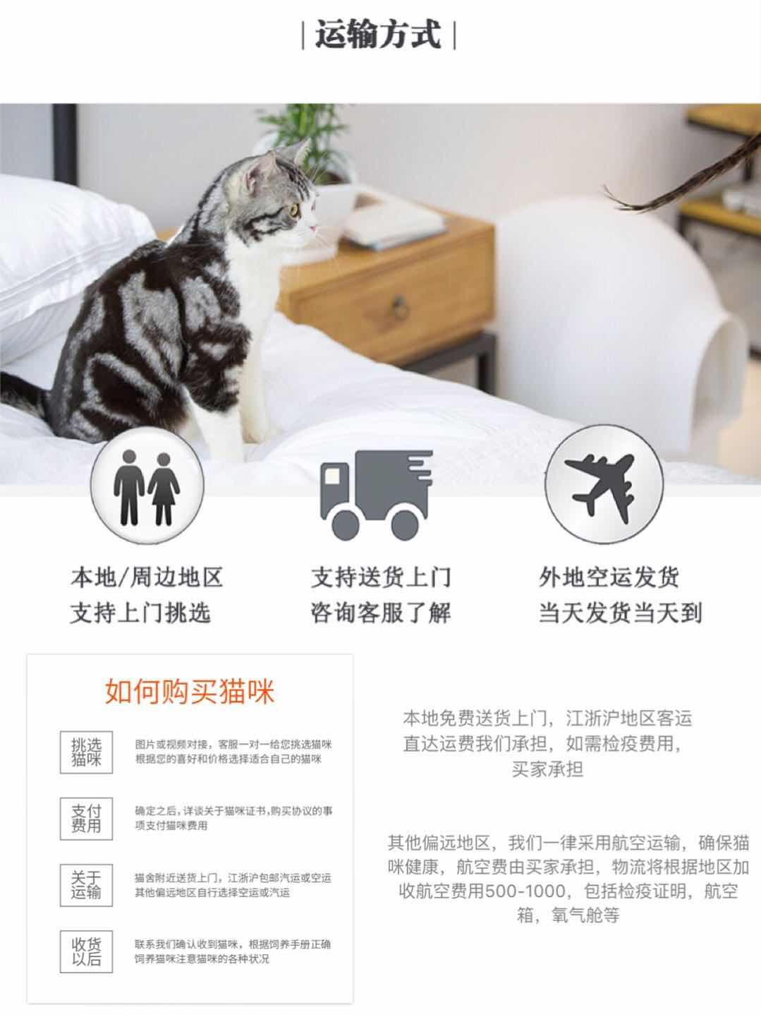 宠物缅因猫幼猫活体小猫咪纯种家养缅因猫活体出售9