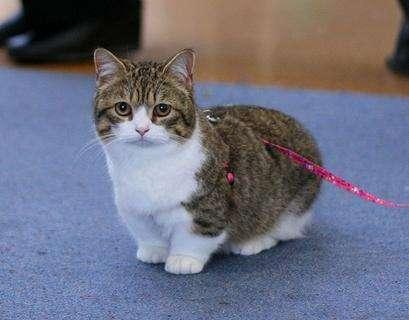 壁纸 动物 猫 猫咪 小猫 桌面 409_320