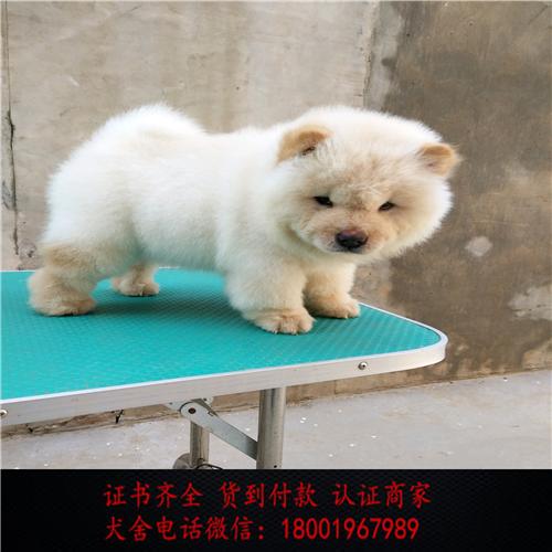 出售精品松狮犬 打完疫苗证书齐全 提供养狗指导