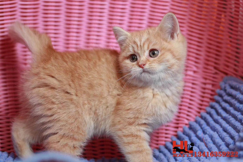 可爱喜欢粘人的田园猫多窝可以选择签订协议