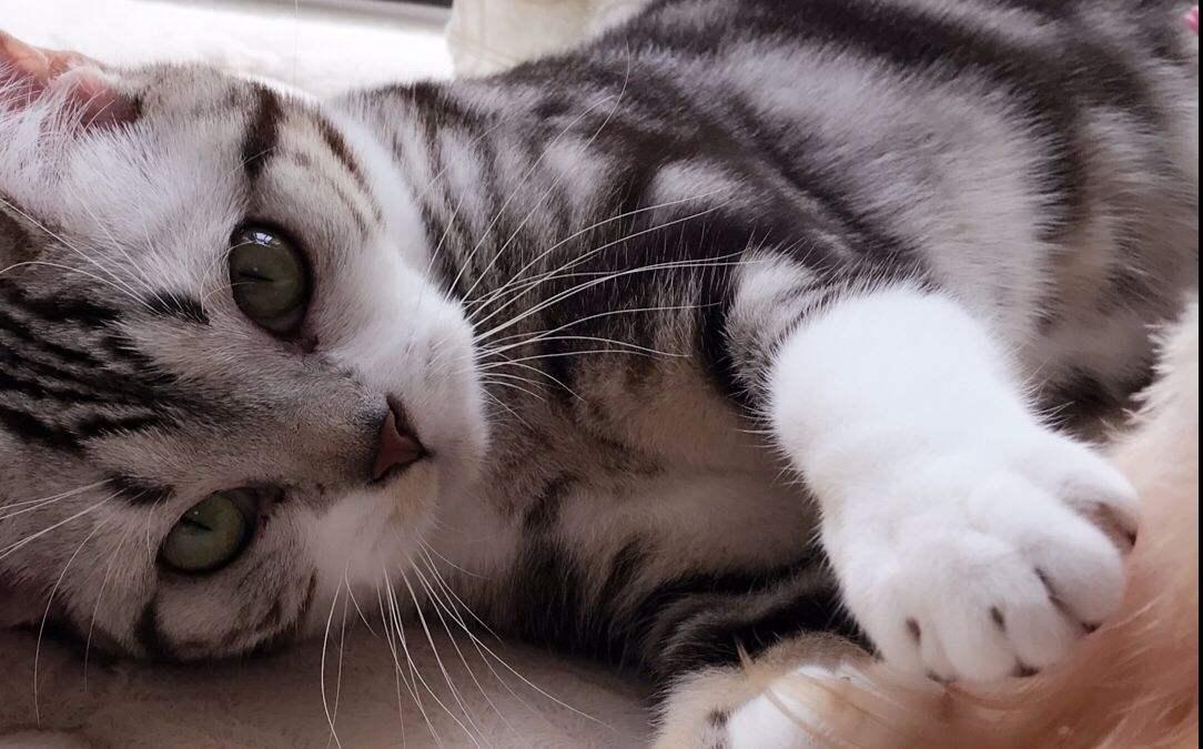 壁纸动物猫咪