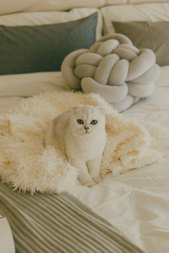 官网推荐猫舍、专业折耳猫繁殖、终身质保