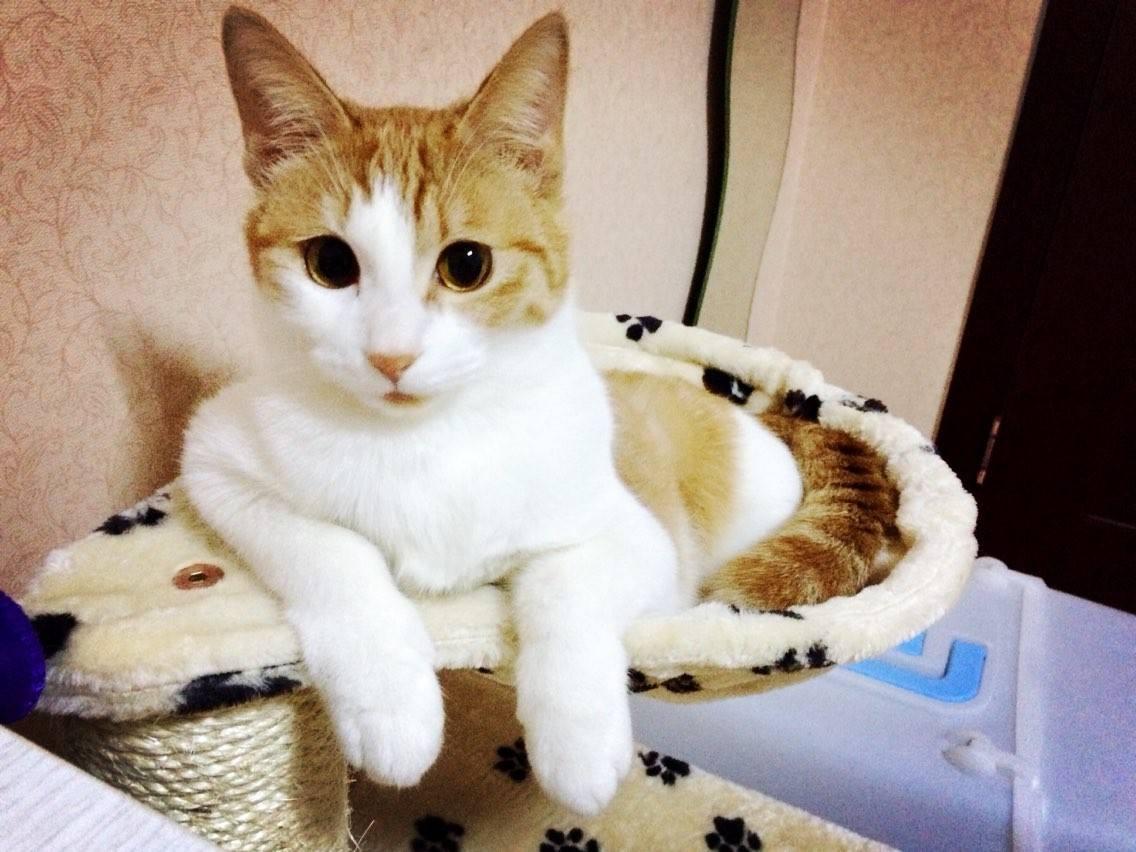 全国当天发货中华田园猫包售后包退换