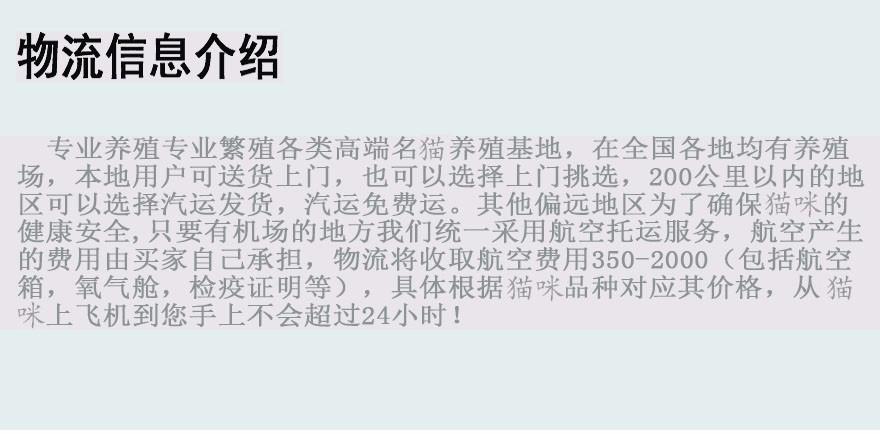 精品高品质中华田园猫热卖中微信咨询欢迎选购10