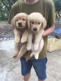 广州天河区哪里有大型的狗场,广州爱心犬舍 狗场