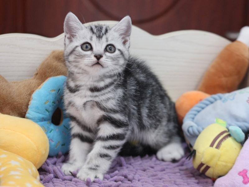 杭州哪里有猫咪卖 杭州哪里猫咪便宜 杭州哪里猫咪最好