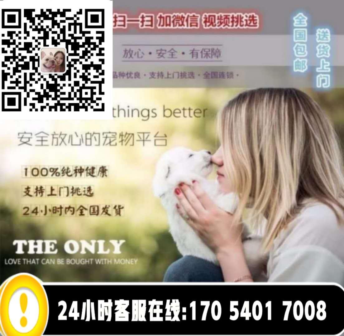 出售纯种波斯猫 加菲猫 活体宠物幼猫 异国短毛 包邮5